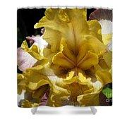 Tall Bearded Iris Named Butterfingers Shower Curtain