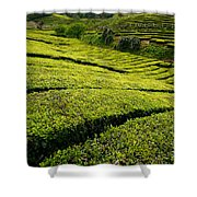 Tea Gardens Shower Curtain