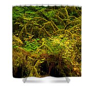 Temperate Rain Forest Shower Curtain by Adam Jewell