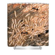 Termite Nest Reticulitermes Flavipes Shower Curtain