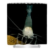 Texas Cave Shrimp Shower Curtain