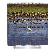 The Odd One Out V2 Shower Curtain