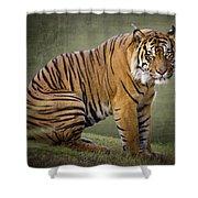 The Sumatran Tiger  Shower Curtain