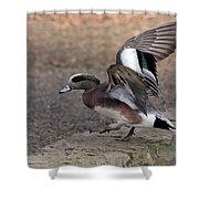 American Wigeon Waterfowl Shower Curtain