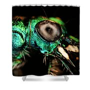 Tiger Beetle Shower Curtain