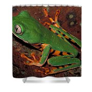 Tiger-striped Monkey Frog Shower Curtain