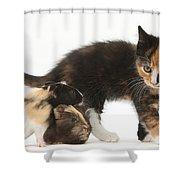 Tortoiseshell Kitten With Baby Shower Curtain