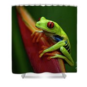 Tree Frog 19 Shower Curtain