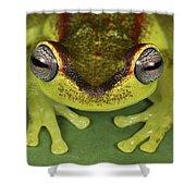 Tree Frog Hyla Rubracyla At Night Shower Curtain