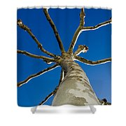 Tree With Branches Shower Curtain