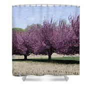 Trees On Warwick Shower Curtain by Trish Tritz
