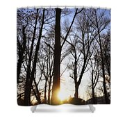 Trees With Sunlight Shower Curtain