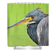 Tricolor Heron Portrait Shower Curtain