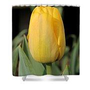 Tulip Named Big Smile Shower Curtain