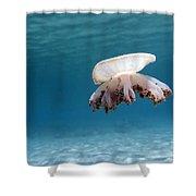 Upside Down Jellyfish In Caribbean Sea Shower Curtain