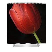 Valentine Tulip Shower Curtain