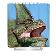 Veiled Chameleon Chamaeleo Calyptratus Shower Curtain by Ingo Arndt