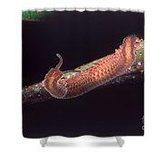 Velvet Worm Shower Curtain