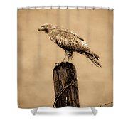 Vintage Hawk Shower Curtain