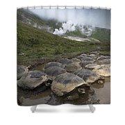 Volcan Alcedo Giant Tortoise Geochelone Shower Curtain