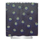 Volvox Aureas Algae Lm Shower Curtain