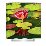 Water Lily Shower Curtain by Darren Fisher