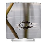 Water Skaters Shower Curtain