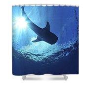 Whale Shark Near Surface With Sun Rays Shower Curtain