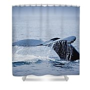 Whales Fluke Shower Curtain