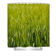 Wheat Field Shower Curtain