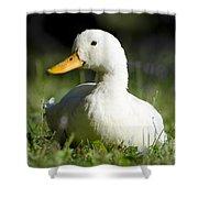 White Duck Shower Curtain