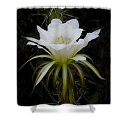 White Echinopsis Flower  Shower Curtain