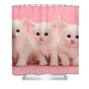 White Kittens Shower Curtain