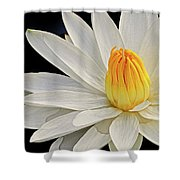 White Waterlily Shower Curtain