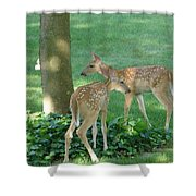 Whitetail Fawns Shower Curtain