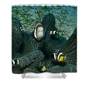 Whole Family Of Clownfish In Dark Grey Shower Curtain