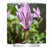 Wild Cyclamen Shower Curtain