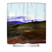 Wine Vineyard In Sicily Shower Curtain