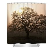 Winter Tree On A Frosty Morning, County Shower Curtain