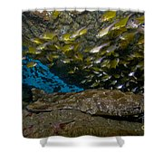 Wobbegong Shark And Cardinalfish, Byron Shower Curtain