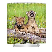 Wolf Cubs On Log Shower Curtain