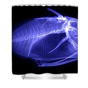 X-ray Of A Clown Triggerfish Shower Curtain
