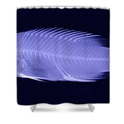 X-ray Of A Wrasse Fish Shower Curtain