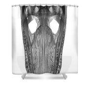X-ray Of American Alligator Shower Curtain