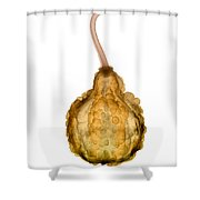 X-ray Of Fall Decorative Gourd Shower Curtain