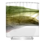 X-ray Of Muskie Shower Curtain