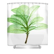 X-ray Of Tobacco Shower Curtain