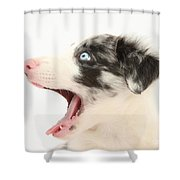 Yawning Border Collie Pup Shower Curtain