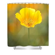 Yellow Poppy Flower, Mount Hood Shower Curtain