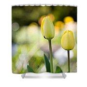 Yellow Tulips Shower Curtain